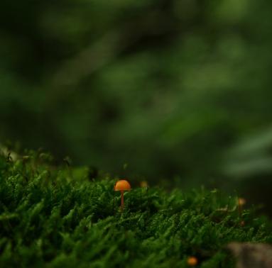 cel mai frumos mod / al naturii / de a picta cu pălărioare oranj / pădurile de mușchi