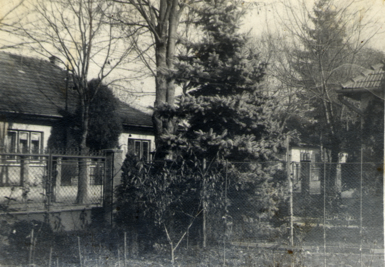 Bradul lui Tuzes, grădina, 1982