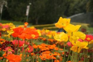 În Golden Gate Park, în fața Conservatorului de flori