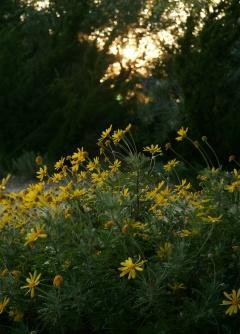 Apus și flori în penumbră