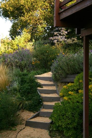 În grădina de lavandă