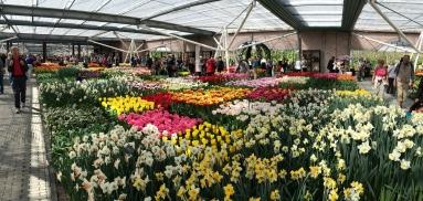 Keukenhof, tulips pavillion