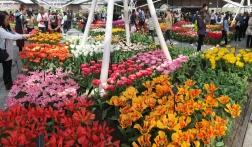 Keukenhof, tulips