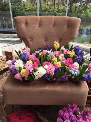 Keukenhof, hyacinths
