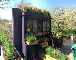 Keukenhof, garden ideas