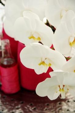 Keukenhof, orchids pavillion
