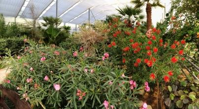 Balcic, Grădina Botanică - Castelul Reginei Maria, Sera de cactusi